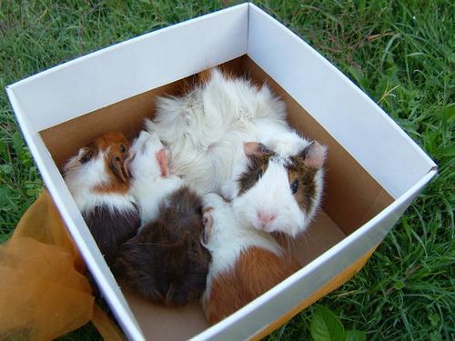 送走我的小老鼠~