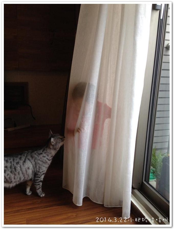 【小貝貝日記】躲貓貓…
