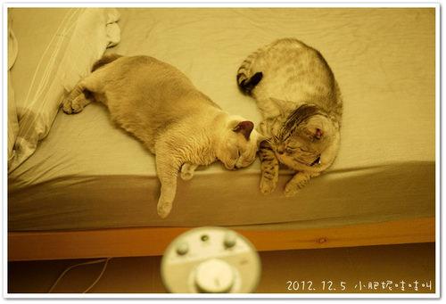 【懷孕大小事】貓要不要送走??