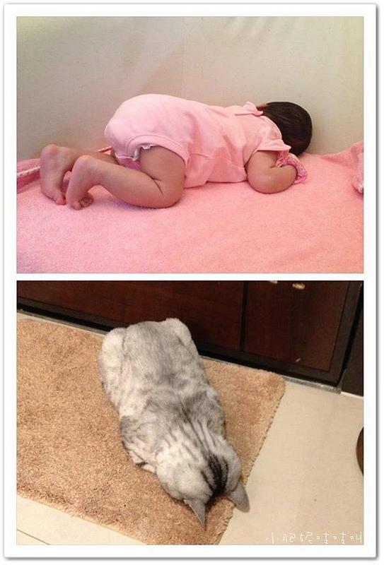 【小貝貝日記】最愛的睡覺姿勢…