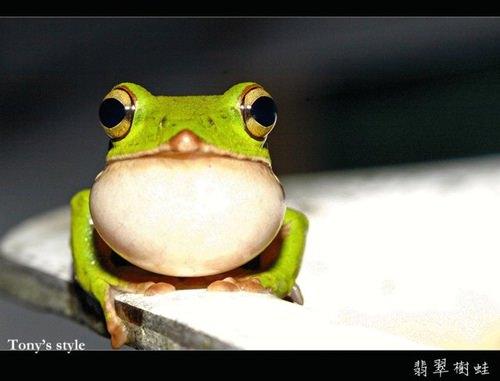 【嫁】青蛙有多美?!