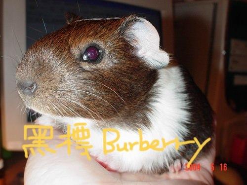 最親愛的BURBERRY–永別了!