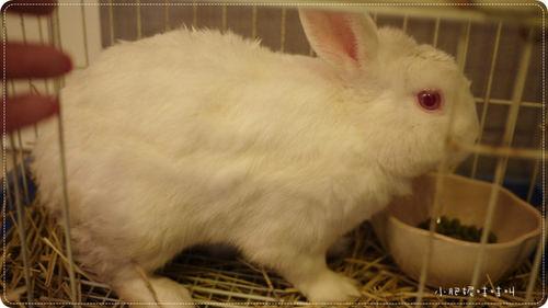 小兔今天要上課嗎??