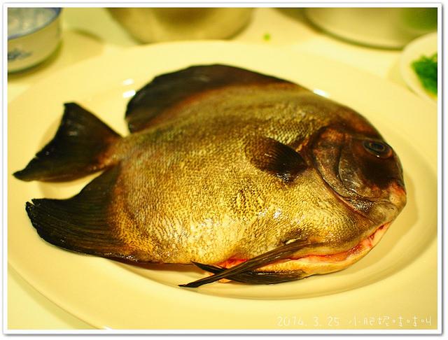 【富貴魚】蒸魚是一道很唬人的料理~