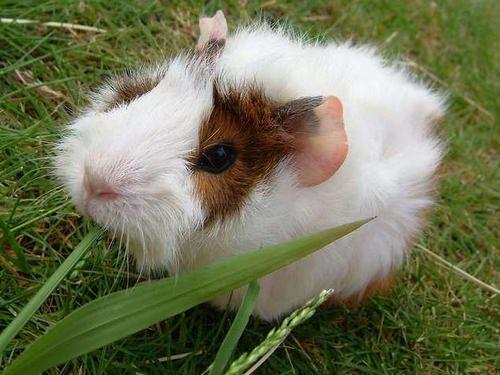 新的天筑鼠–樂不思鼠