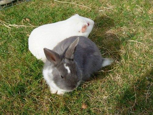 兔子鬼混記
