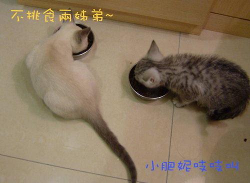 什麼人養什麼貓~